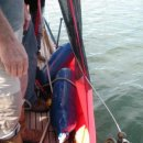 Using the Man-Overboard Sling