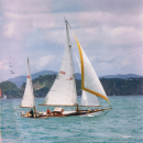 Trixie sailing in the Bay of Islands